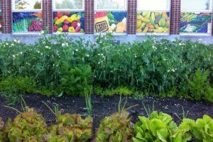 IMG_3758 Food Bank garden